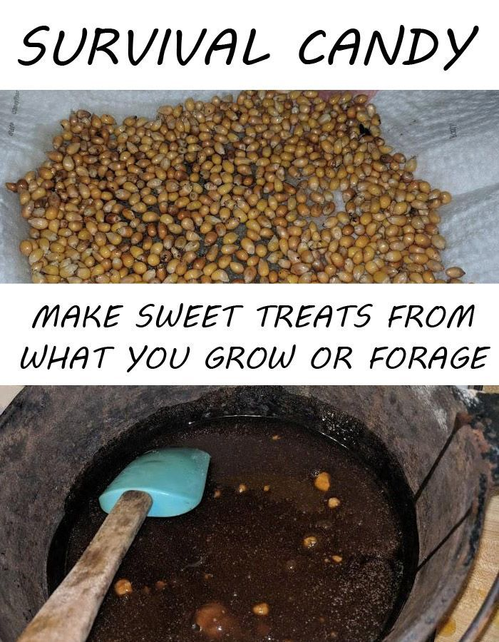 Survival Candy – Make Sweet Treats from What You Grow or Forage