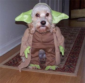 Is Your Pet Dressing Up For Halloween Yoda Dog Costume Cute