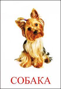 Собака картинка для детей | Щенки йоркширского терьера ...