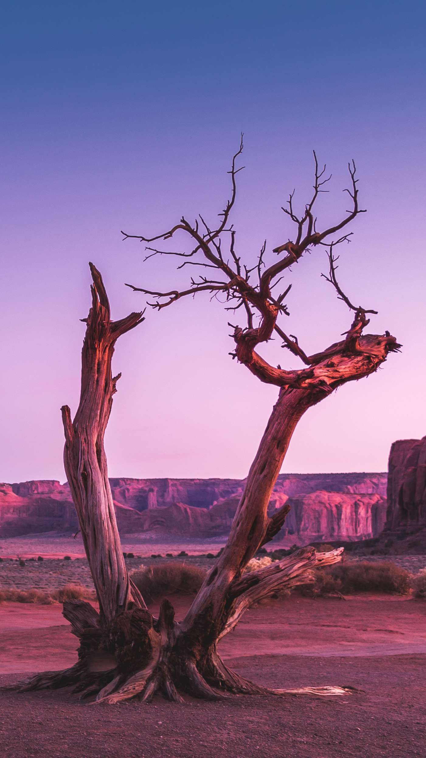 Old Tree In Desert Valley Iphone Wallpaper In 2020 Best Iphone Wallpapers Cool Wallpapers For Phones Aesthetic Iphone Wallpaper