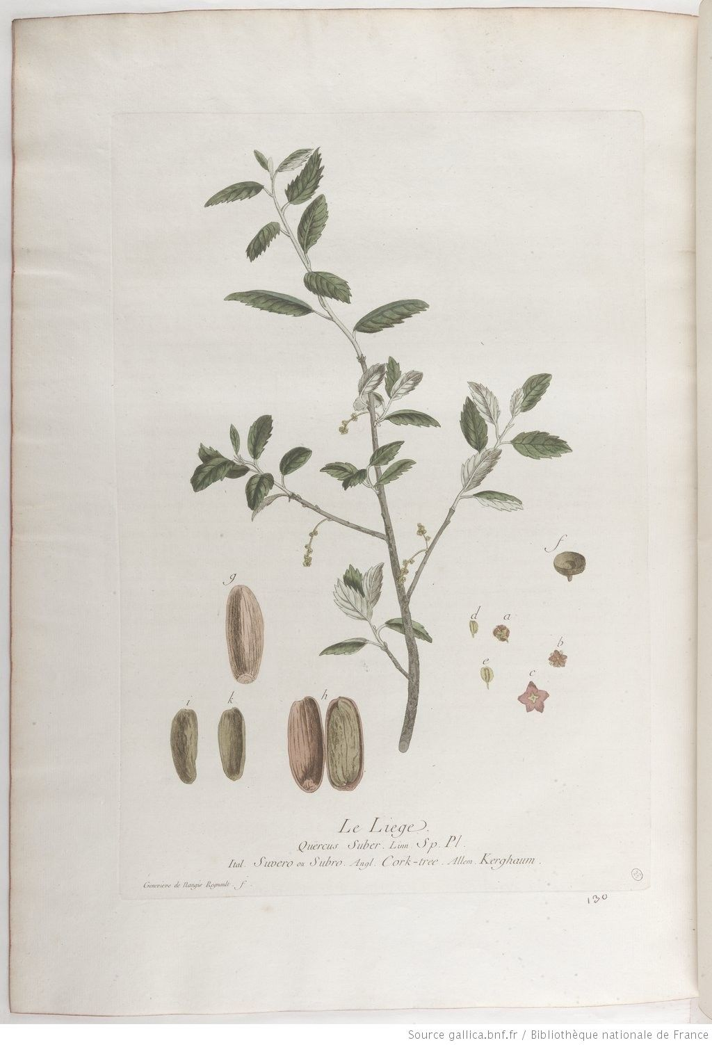 Liège, La botanique mise à la portée de tout le monde... Exécuté et publié par les Sr et De Regnault.... Tome 2 | 1774