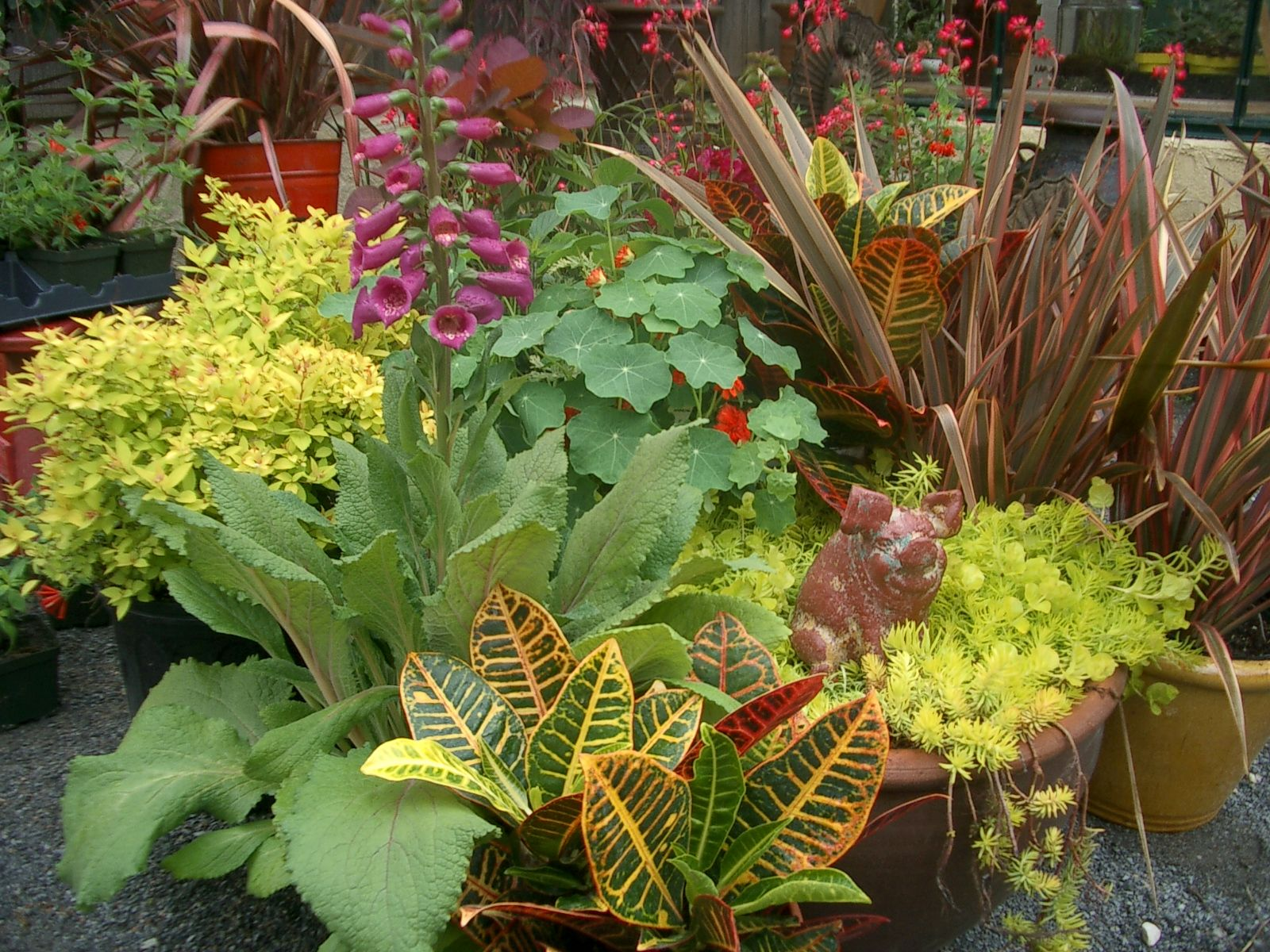 Tropical Croton Petra with sedum 'Angelina' and Phormium 'Pink Flamingo' -the Spirea Goldmound behind them works too...