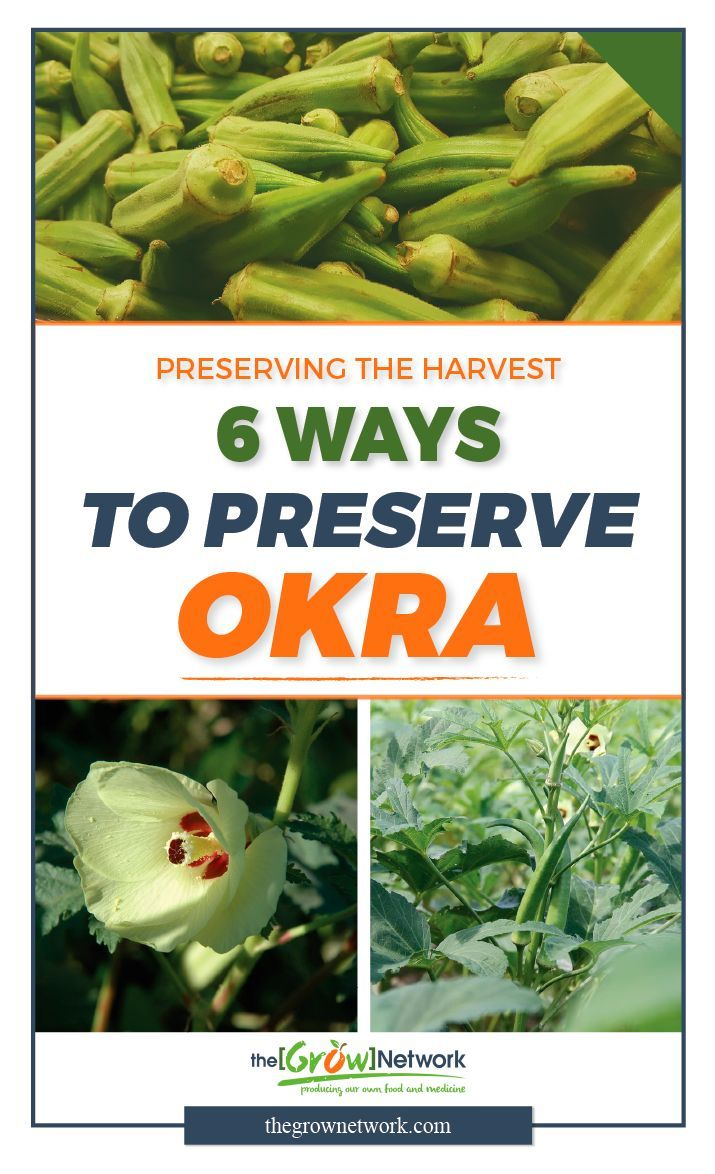 Medium Of How To Freeze Okra
