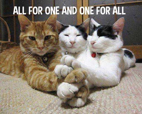 The Three Whiskerteers Funny Animal Pictures