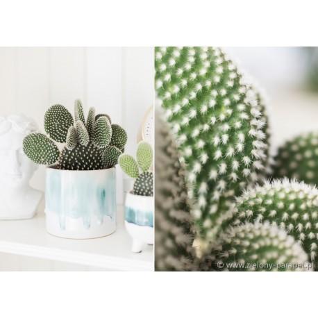 Pin On Kaktusy I Sukulenty Cacti And Succulents