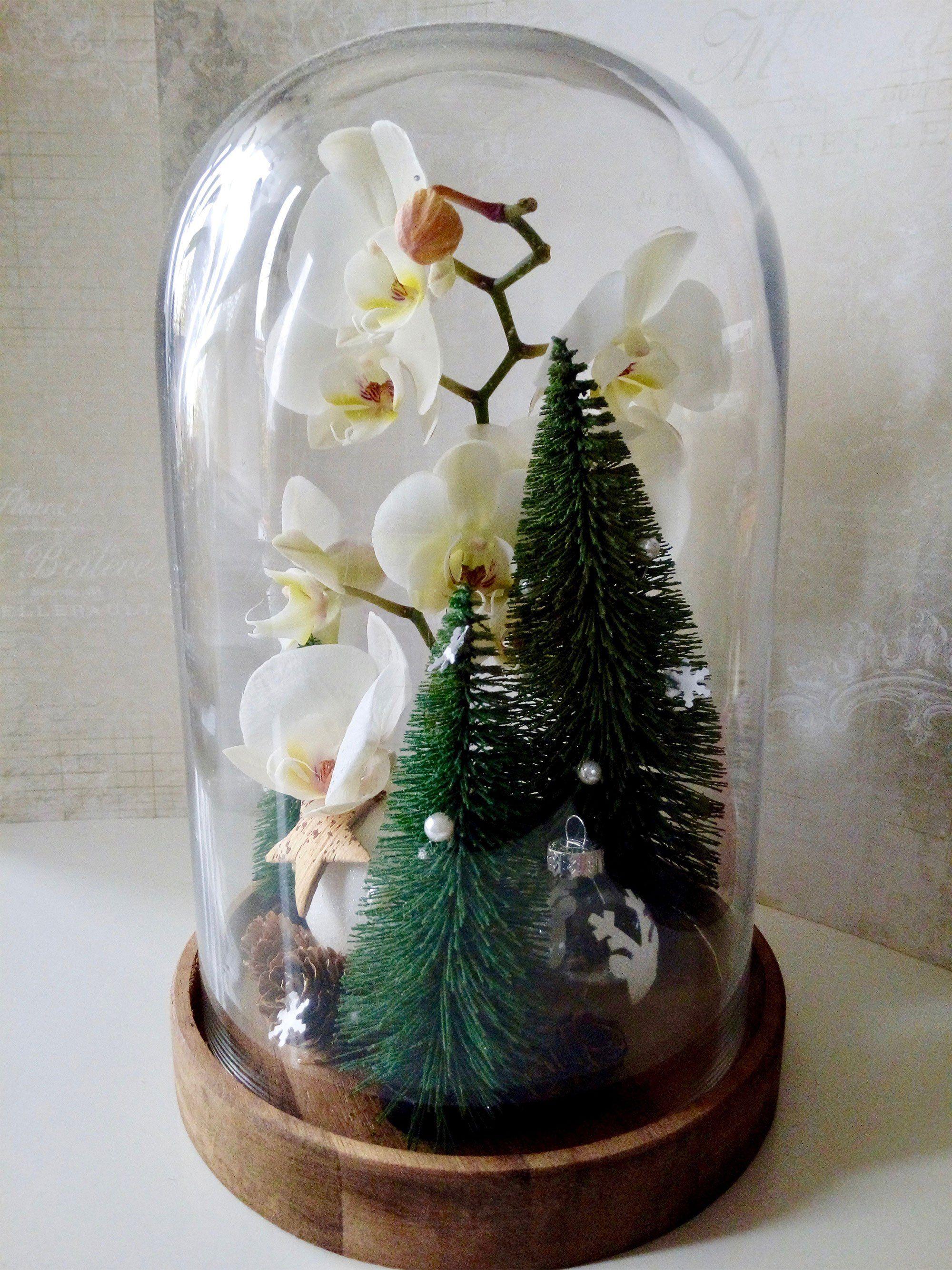 Trésor sous verre - Arborescence