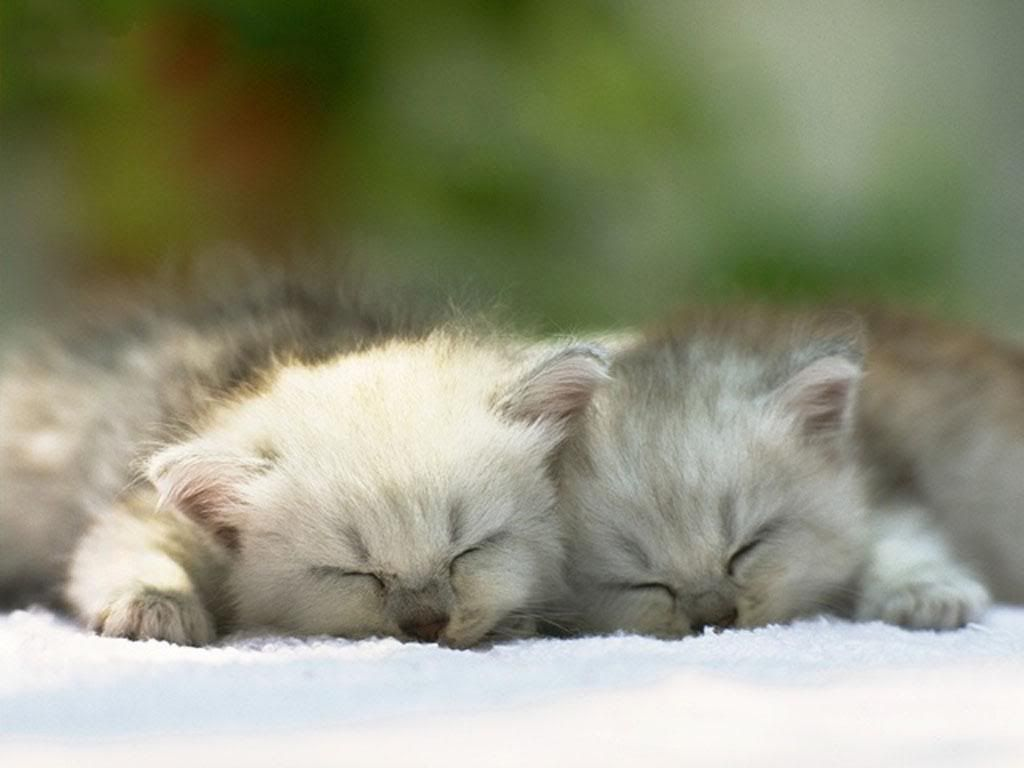 that s realy cute Just look at them