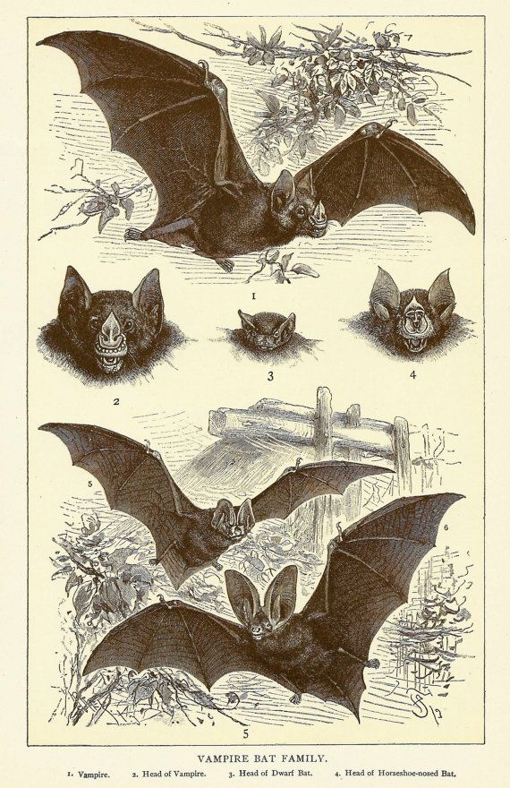 Pin By Jen On This Is My Halloween Bat Art Antique
