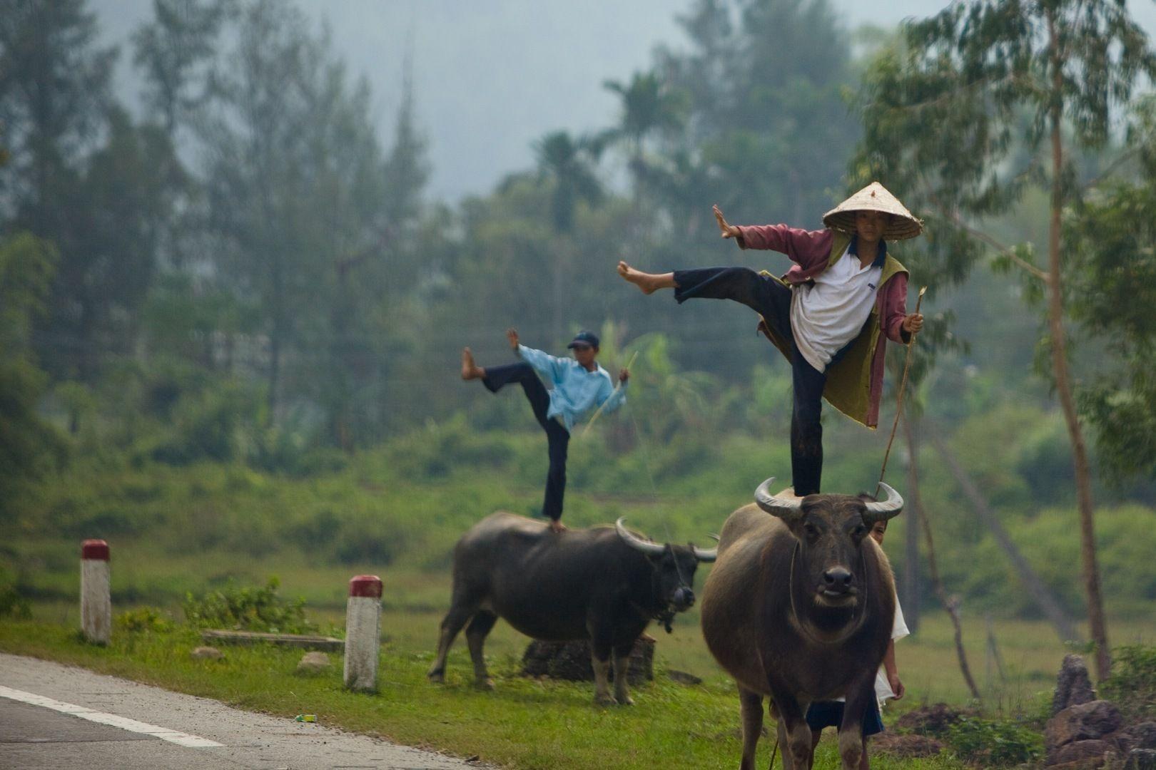 предложили картинки смешные вьетнамцы иллюстрации