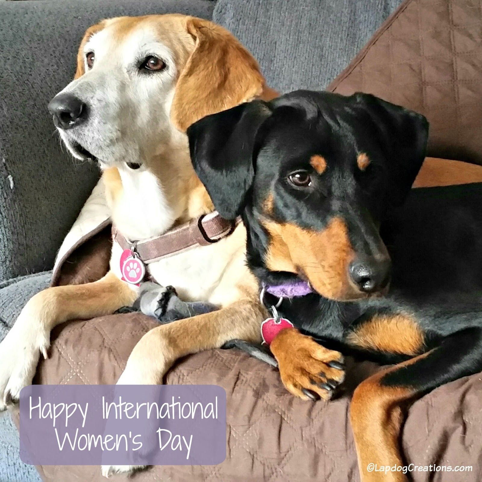 Happy International Womens Day From Sophie & Penny Lapdogcreations Dog
