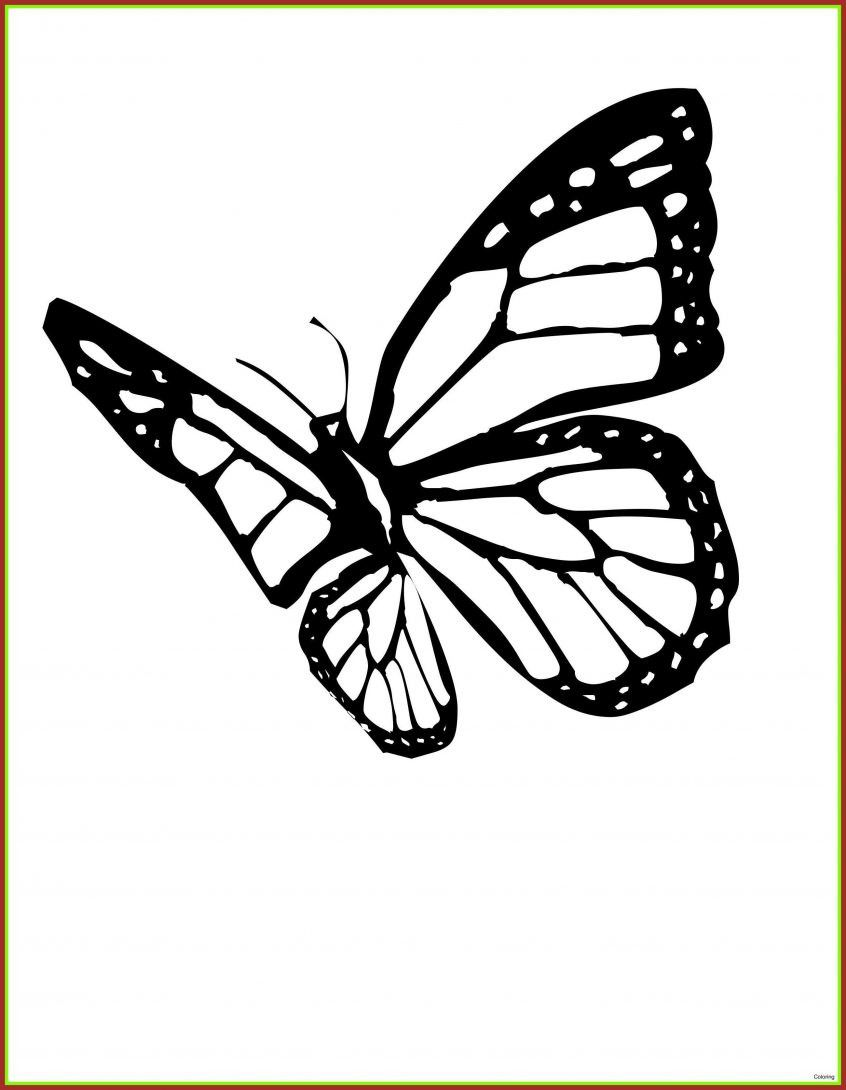 Butterfly Coloring Page Free Youngandtae Com Butterfly Coloring Page Monarch Butterfly Tattoo Pictures Of Monarch Butterflies [ 1090 x 846 Pixel ]