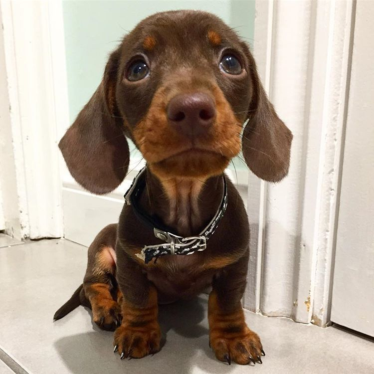 His Collar His Eyes His Ears His Puppy Dog Rolls Via