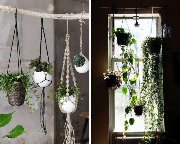 Plantes suspendues fonctionnelles et d coratives for Plante a suspendre interieur