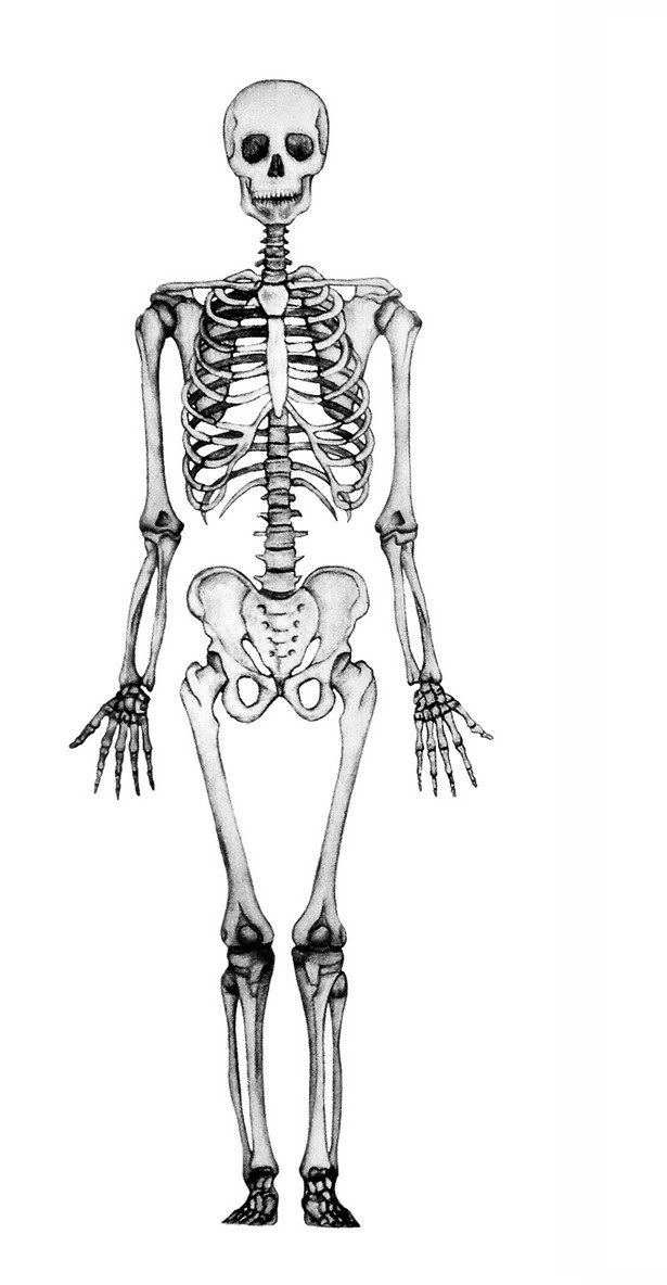 esqueleto | prácticas | Pinterest | Huesos del cuerpo humano, Huesos ...