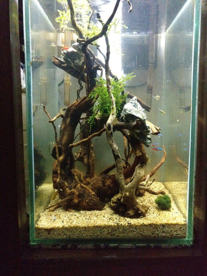 Pin by daria k on akwarium pinterest aquariums and fish tanks