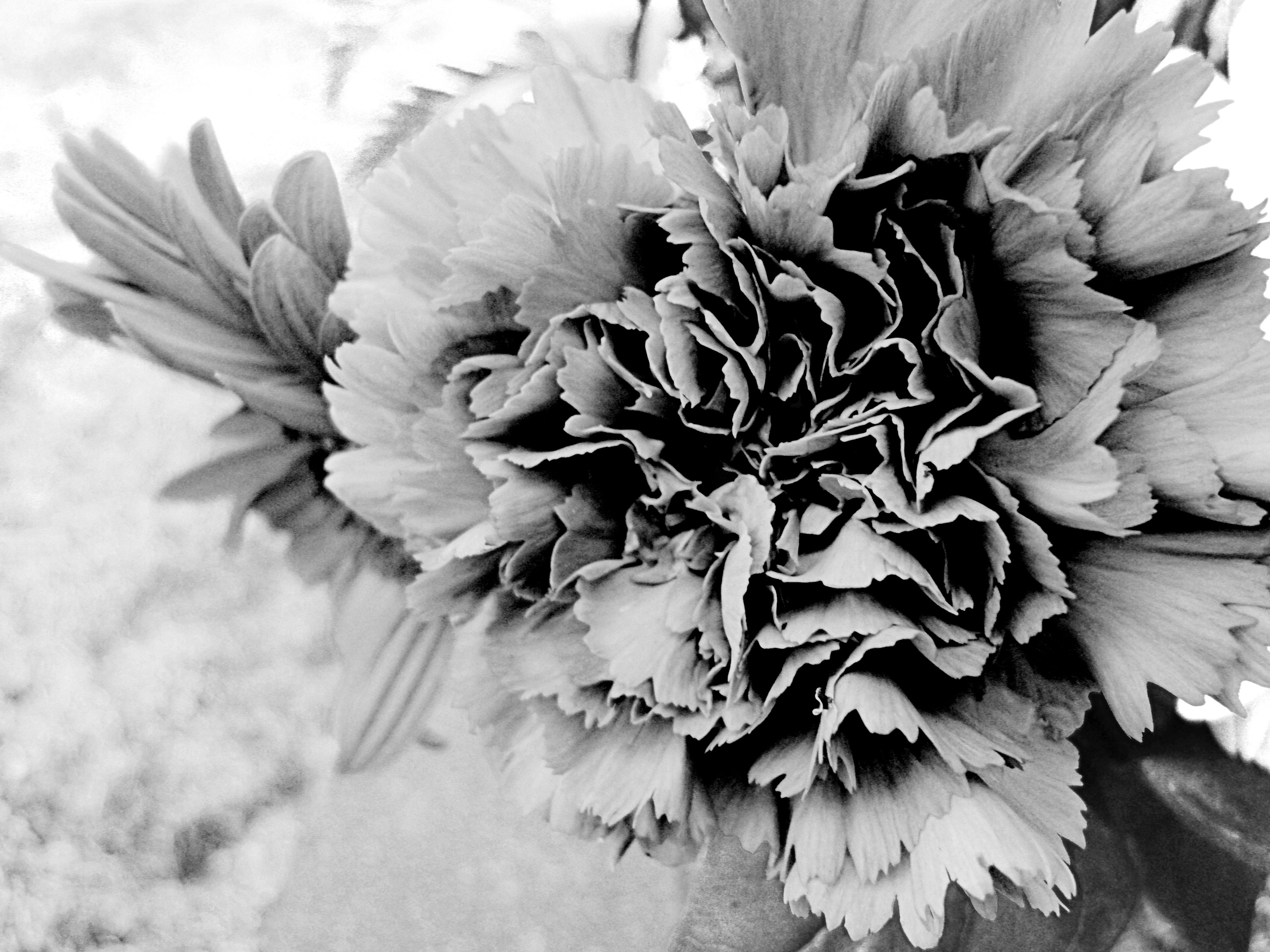 I actually took this, I love flower pictures :). Feel free to pin it.
