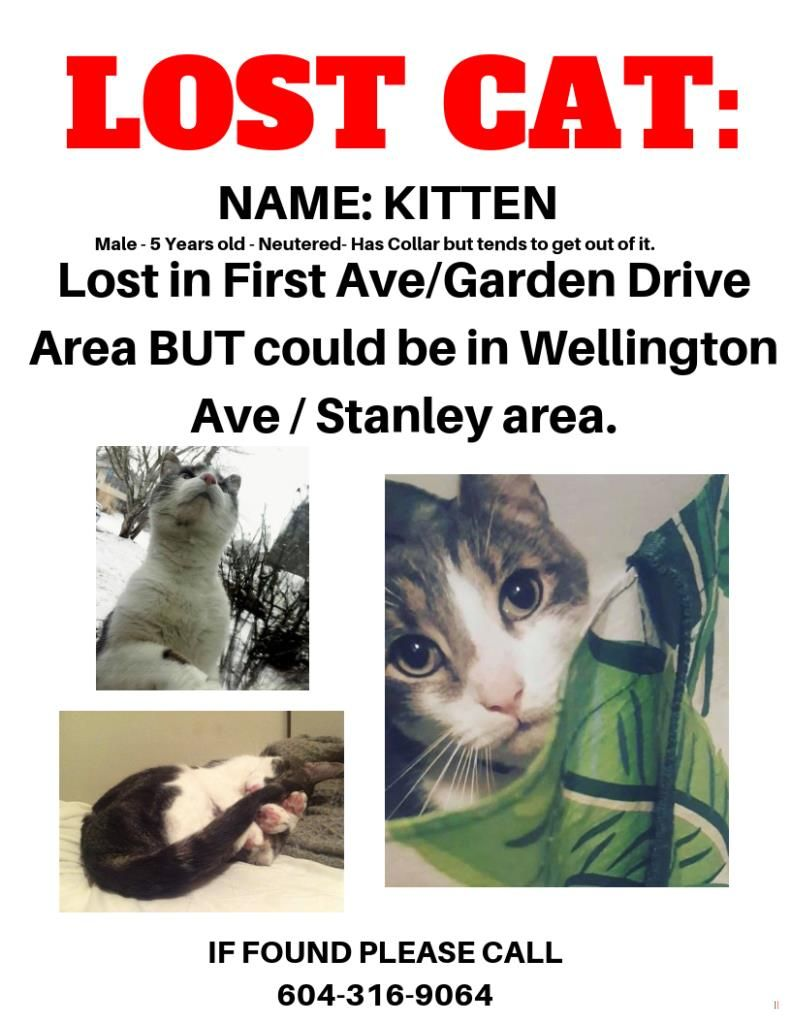 Lost Cat Male Chilliwack Bc Canada V2p 5m7 Lost Cat Cats Losing A Pet