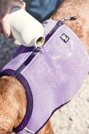 Hurtta Evaporating Cooling Dog Vest In 2020 With Images Dog