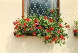 http://www.gardeninginfozone.com/wp-content/uploads/2010/09/window-flower-boxes.jpg