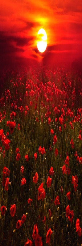 "At the going down of the sun - we will remember them - photo by ""Deep Red"" Marco Carmassi"