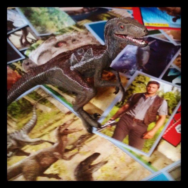 "#Blue ""helping"" with my sticker book. She's picked her favorite sticker. #JurassicPark #JurassicWorld #Dinosaurs #ChrisPratt #Panini #Stickers"