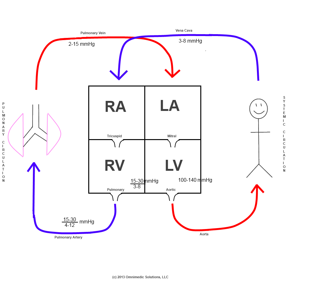 schematic diagram of heart circulation - Google Search