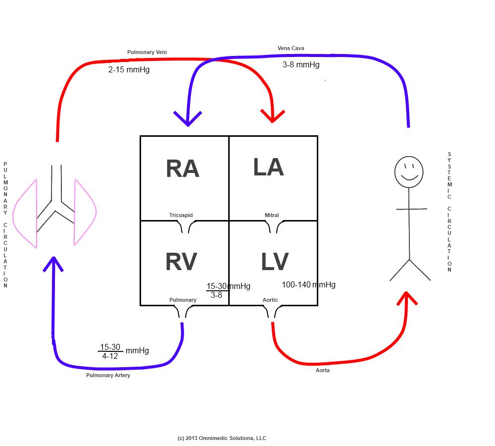 schematic diagram of heart circulation - Google Search ...