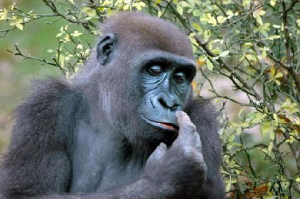 Болезни, которыми человек заразился от животных