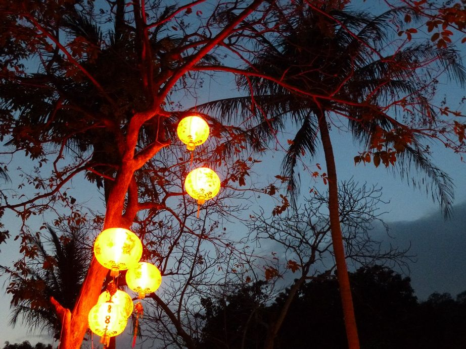 Thailand palm decorated for Chinese New Year.