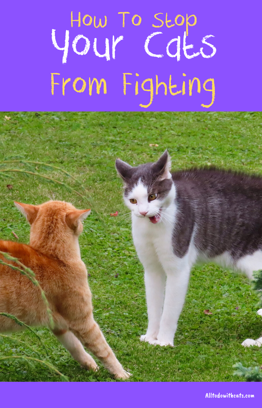 How To Stop Your Cats From Fighting Each Other? in 2020