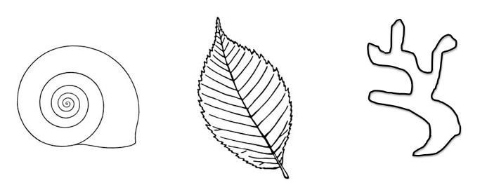 organic shapes found in nature - Google Search