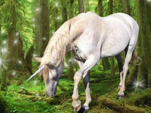 Unicornio es un ser independiente y solitario q permite pocos contactos