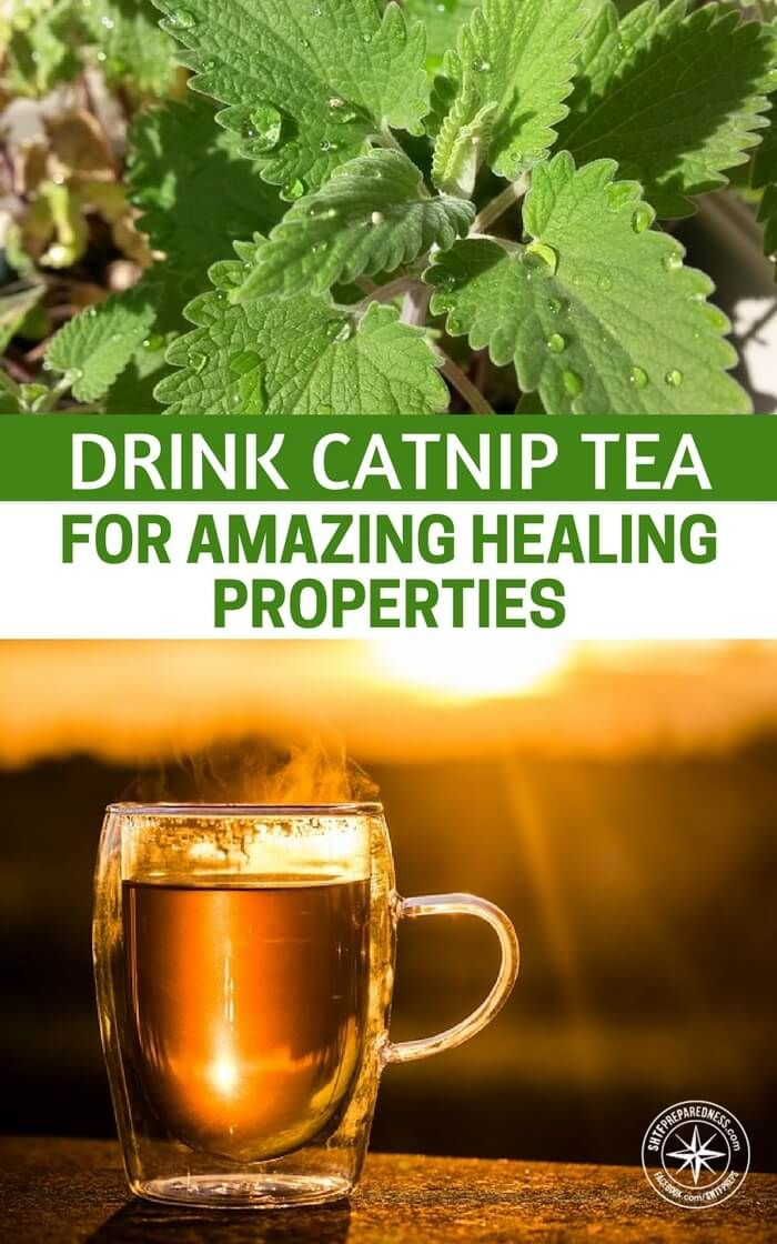 Drink Catnip Tea for Amazing Healing Properties Healing