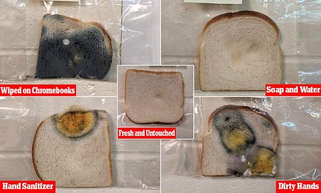 3rd Graders Disgusting Moldy Bread Hand Washing Experiment Goes