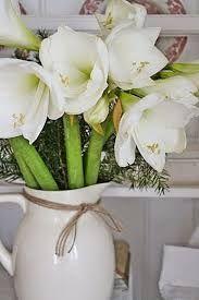 Bildergebnis für amaryllis jul #amaryllisdeko Bildergebnis für amaryllis jul #amaryllisdeko