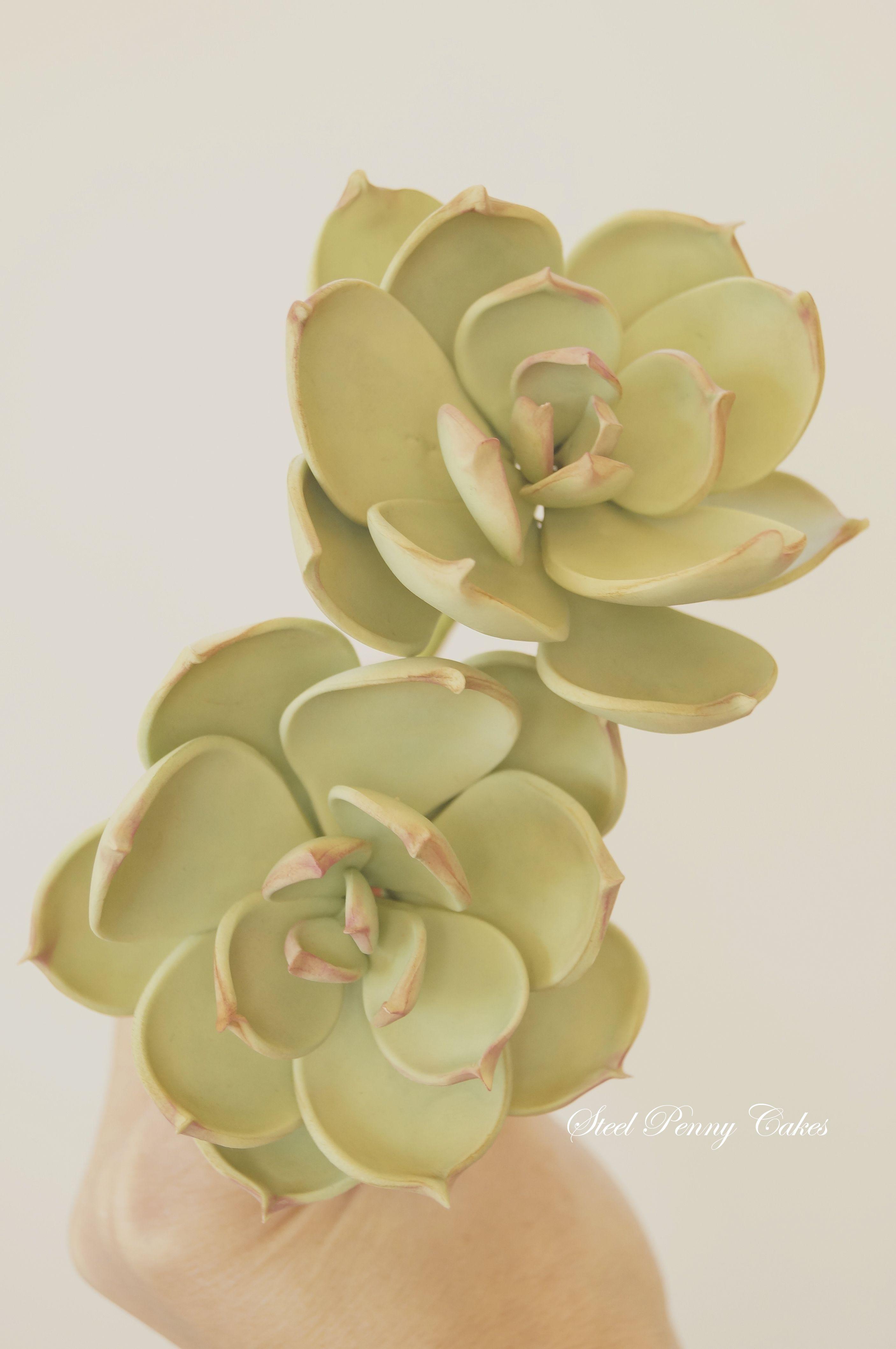 Gumpaste Succulents By Elysia Smith Steel Penny Cakes Tutorials