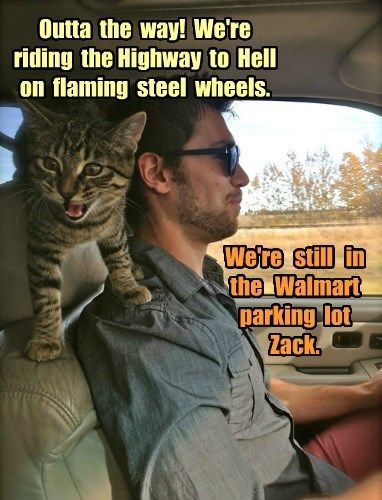 Zack Gets Excited for Car Rides...this kitty would be my perfect driving partner