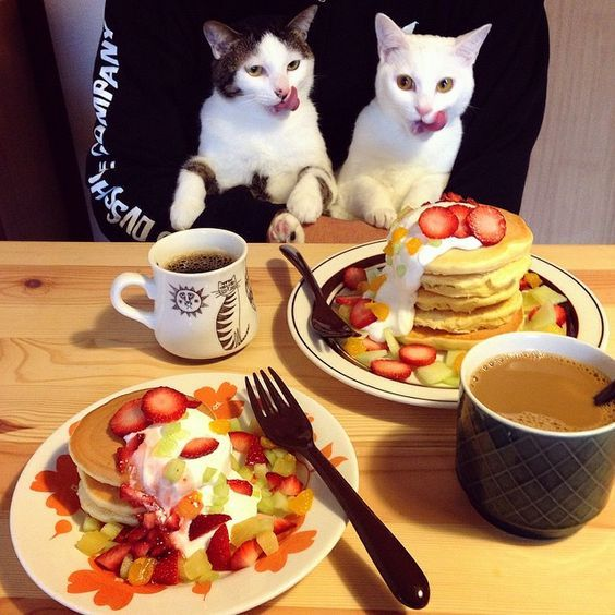 National No One Eats Alone Day 10 Cats Celebrating With