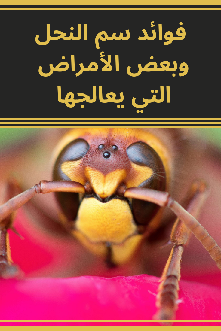 بعض فوائد سم النحل والأشياء التي يجب مراعاتها قبل الشروع في العلاج بسم النحل أو ما يسمى لدغ النحل Movie Posters Blog Posts