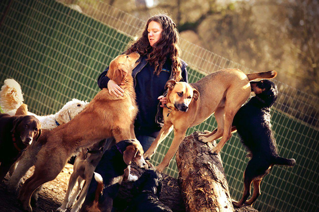 Dog Kennel Victoria Bc Pet Pampering