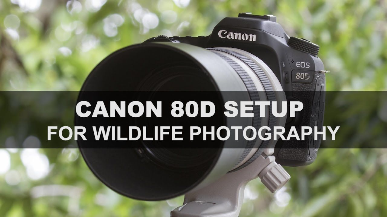 Canon 80d Setup For Wildlife Photography Youtube Photography Wildlife Photography Digital Camera