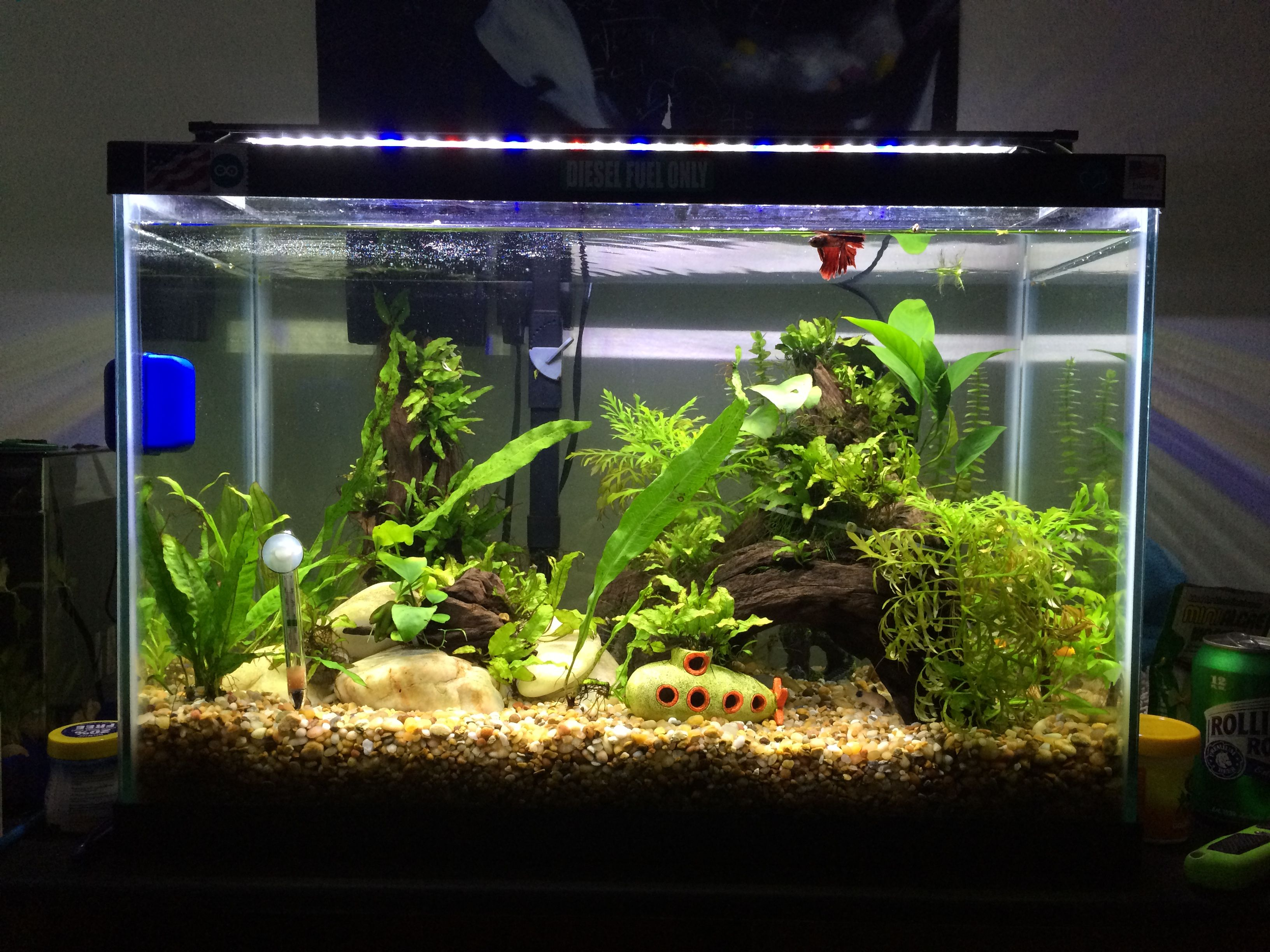 My 20 gallon community fish tank 1 betta 2 telescope for 2 gallon betta fish tank