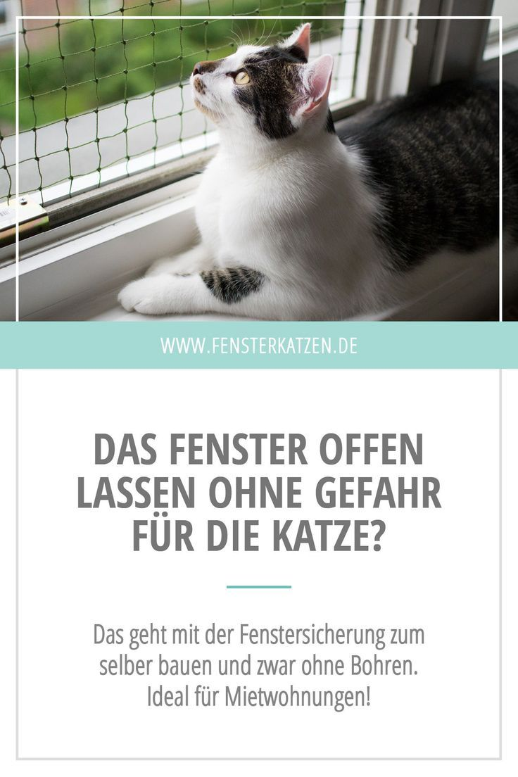 Fenstersicherung für Katzen ohne Bohren Fenstersicherung