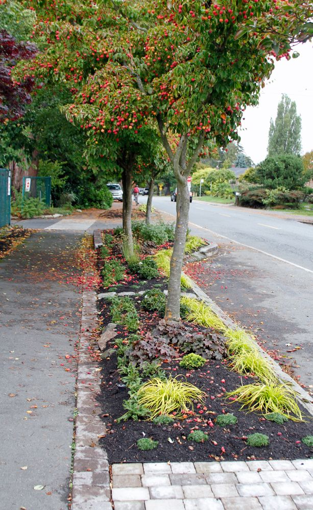 Swansons Autumn Project Part Two Our New Parking Strip Plants Garden Yard