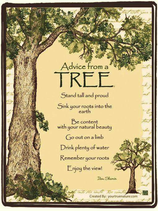 Tree Is So Right Nature Quotes Trees Family Tree Quotes Tree Quotes