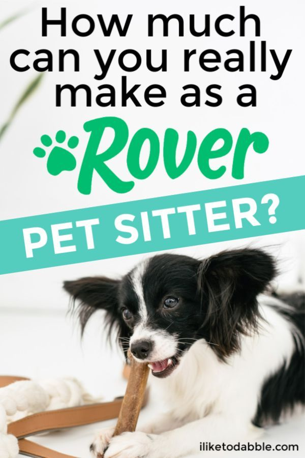 Rover Sitter Review Is Rover a Good Side Job? Best