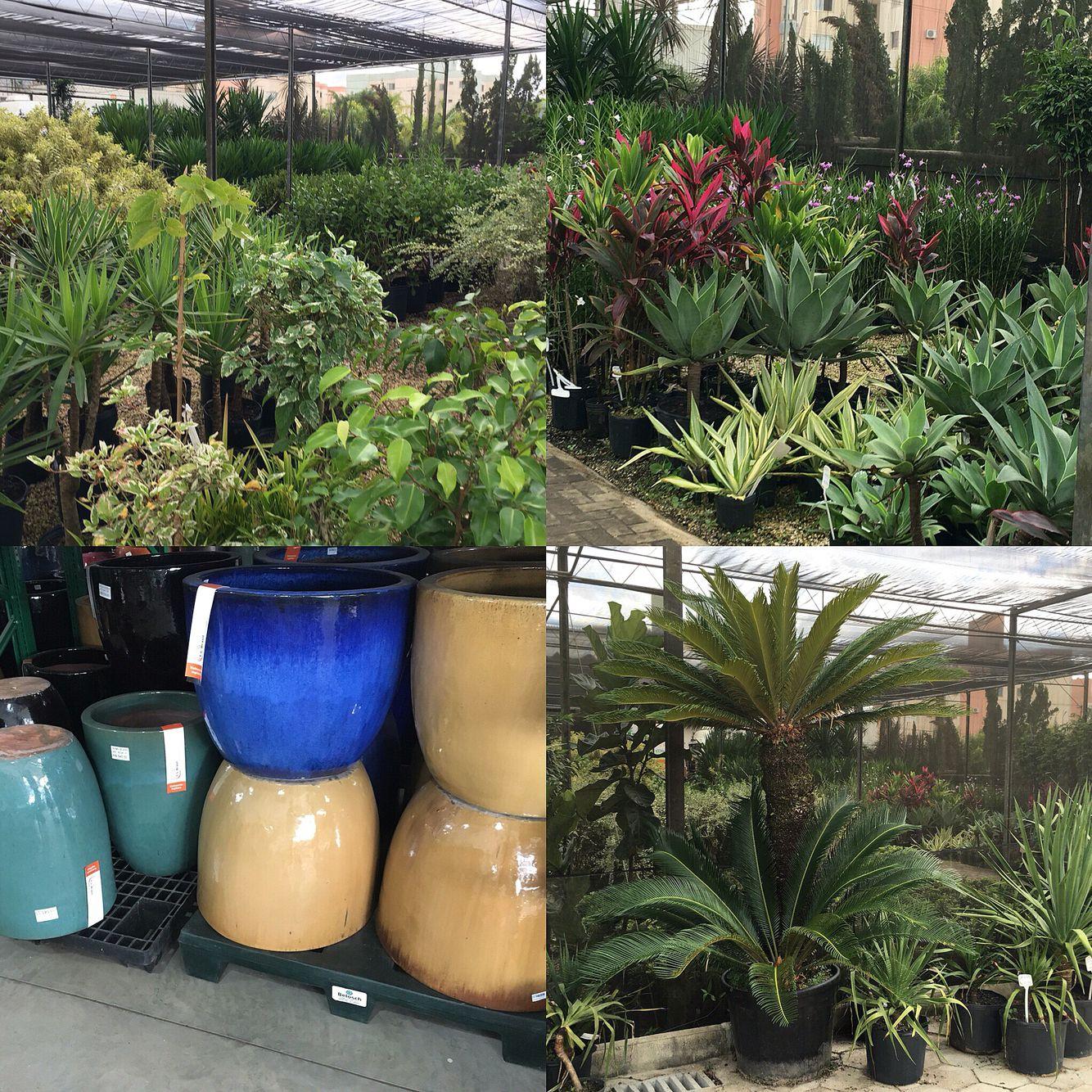 Escolhendo algumas opções em planta para um projeto em andamento.
