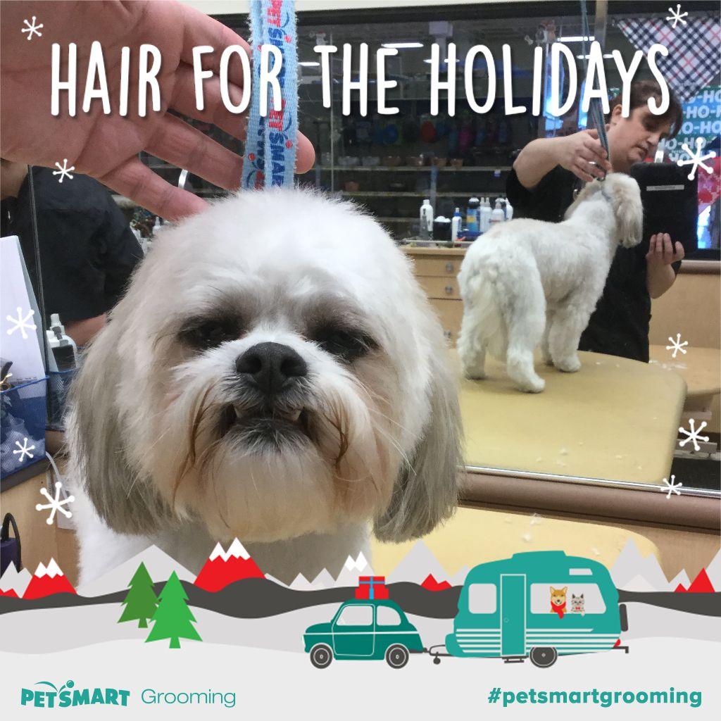 Heres my pet photo petsmart grooming animal photo pets