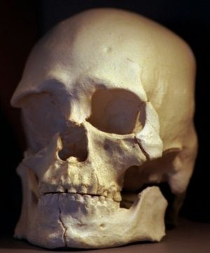DNA analysis reignites fierce debate over fate of 9,000-year-old skeleton. Genome sequencing indicates Kennewick Man is Native American, reopening the bitter battle over whether he should be reburied or studied.