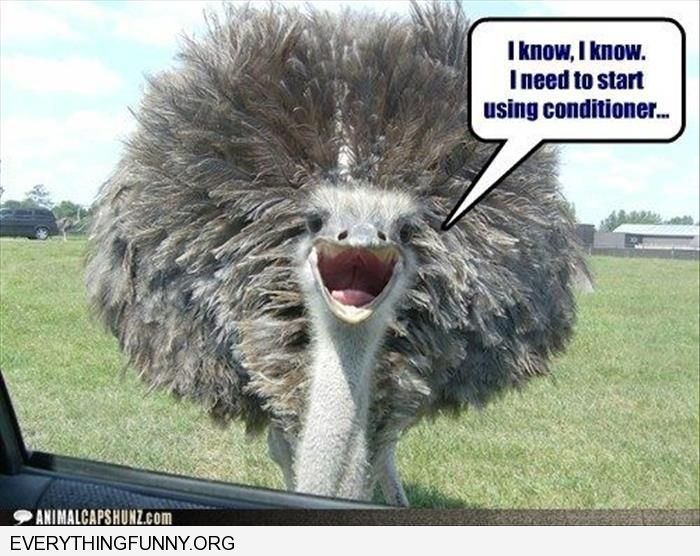 funny caption ostrich i know i need conditioner | home ...